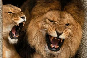 x-lion-background